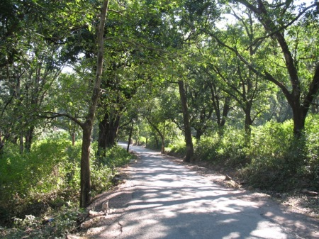 Lovely Forest Road