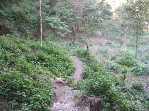 laxman-waterfall05
