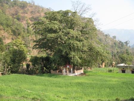 Temple in Green Field