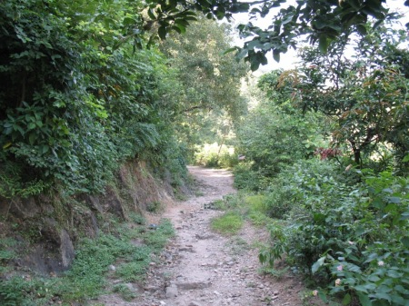 back path home
