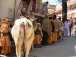 Food Line at Ashram
