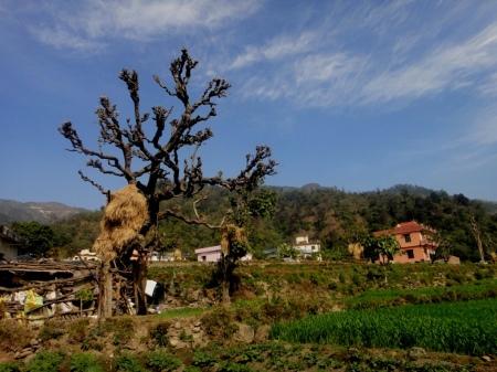 Tapovan Village scenes