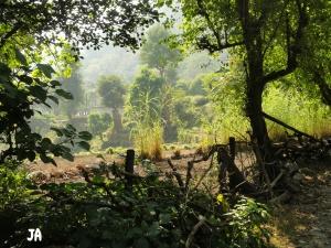 Village Scene Tapovan