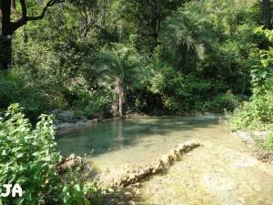 Paradise in Tapovan