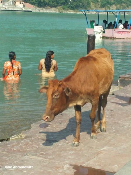 everyday sight along Swag Ashram ghats